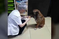 سگ ولگرد برای درمان زخمهایش به داروخانه پناه برد!