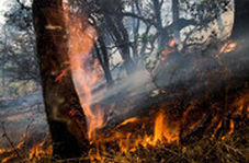 جنگلهای سیاهکل همچنان درآتش میسوزد