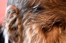 پسر نوجوان گرگ نما که صورتی پر از مو دارد