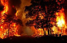 خاکستر شدن بخش عظیمی از جنگلهای کالیفرنیا!