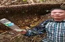 مرگ یک مرد به دست زنبورهای عسل + فیلم
