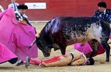 حمله وحشتناک گاو به سه مرد در مراسم گاوبازی